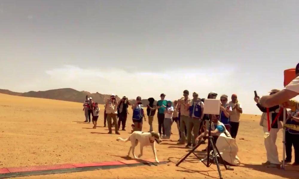 Koira juoksi yli 200 km maratonin Saharan aavikolla, eikä koiran omistajalla ollut mitään tietoa asiasta.