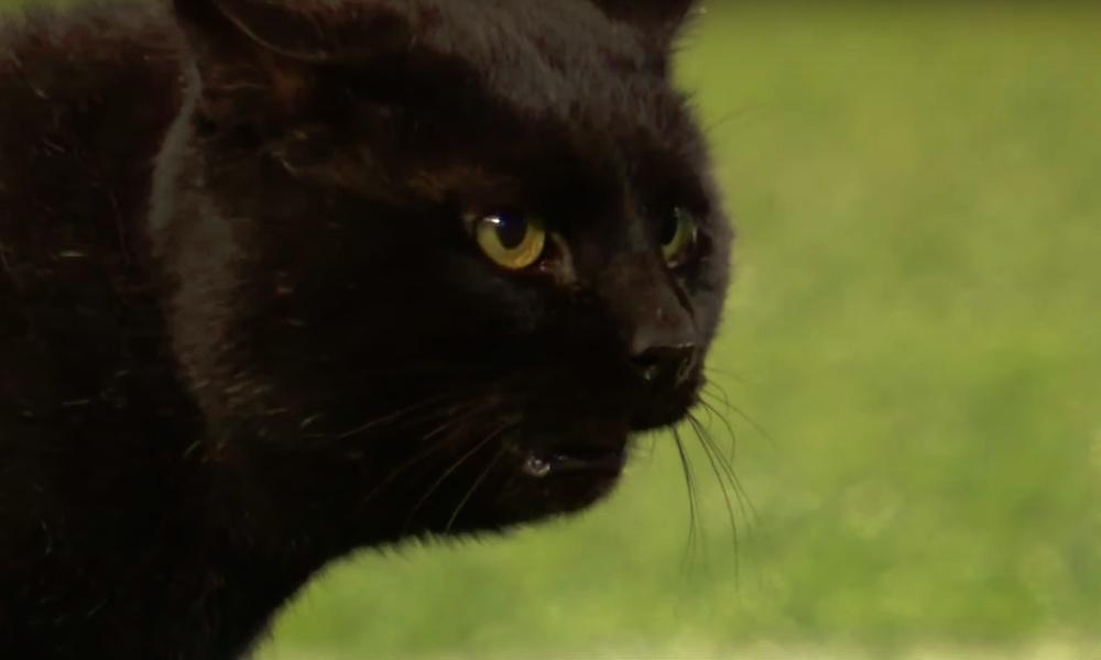 Musta kissa keskeytti NFL-ottelun New York Giantsin ja Dallas Cowboysin välillä: radioselostaja Kevin Harlan otti homman loistavalla tavalla haltuun.